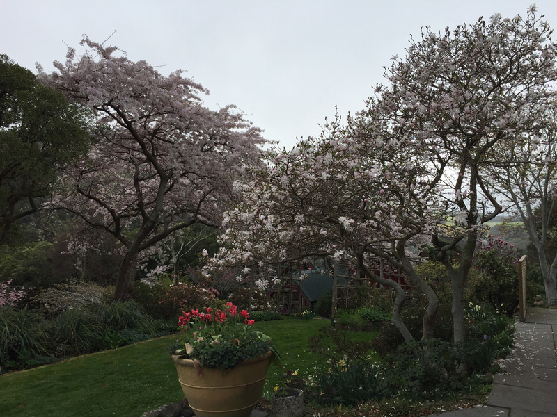 Spring time at Hereweka Garden