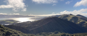 View from the top of Hereweka of bush and Otago Peninsula